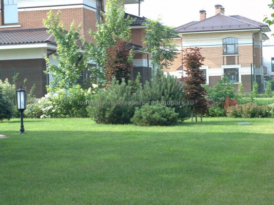 ЛК «Лонопарк» - Посадка растений